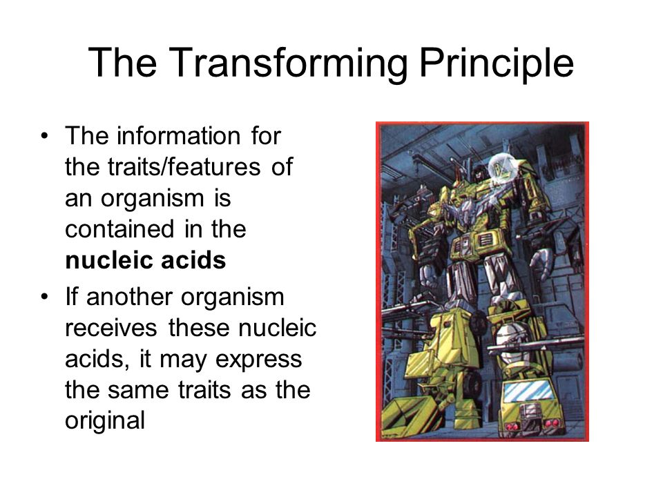The Transforming Principle The information for the traits/features of an organism is contained in the nucleic acids If another organism receives these nucleic acids, it may express the same traits as the original