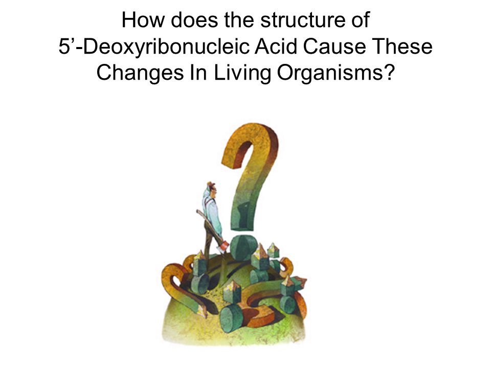 How does the structure of 5'-Deoxyribonucleic Acid Cause These Changes In Living Organisms
