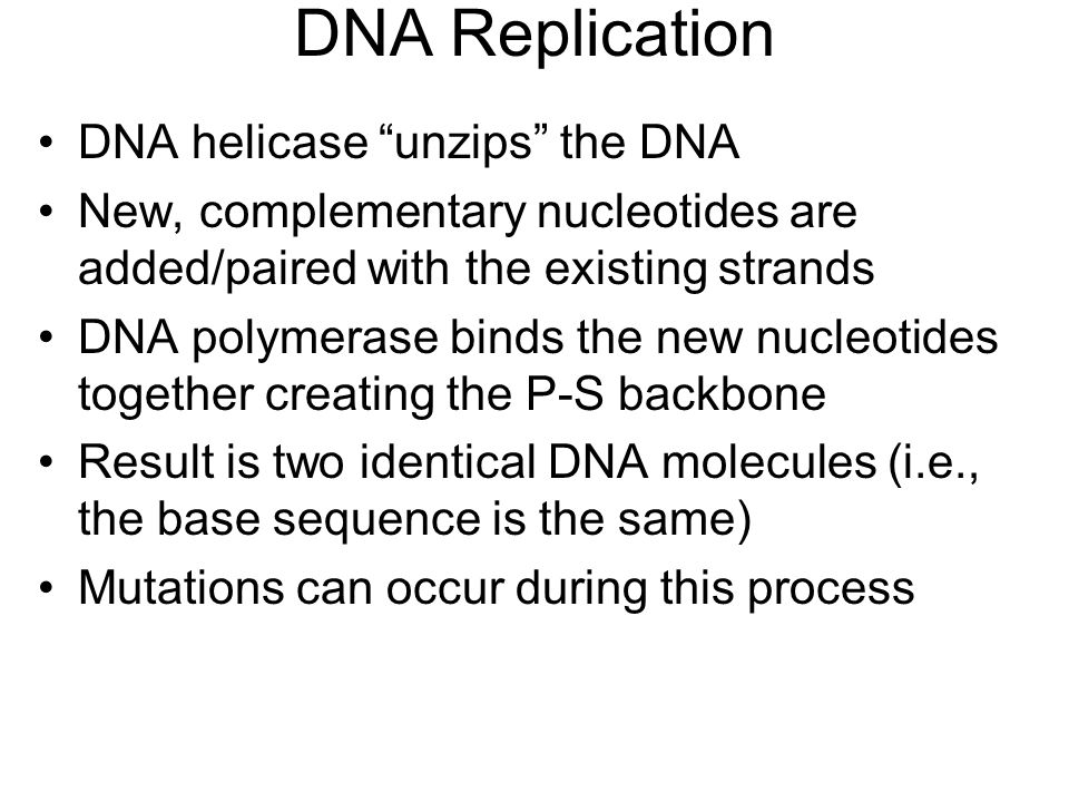 DNA Replication DNA helicase unzips the DNA New, complementary nucleotides are added/paired with the existing strands DNA polymerase binds the new nucleotides together creating the P-S backbone Result is two identical DNA molecules (i.e., the base sequence is the same) Mutations can occur during this process