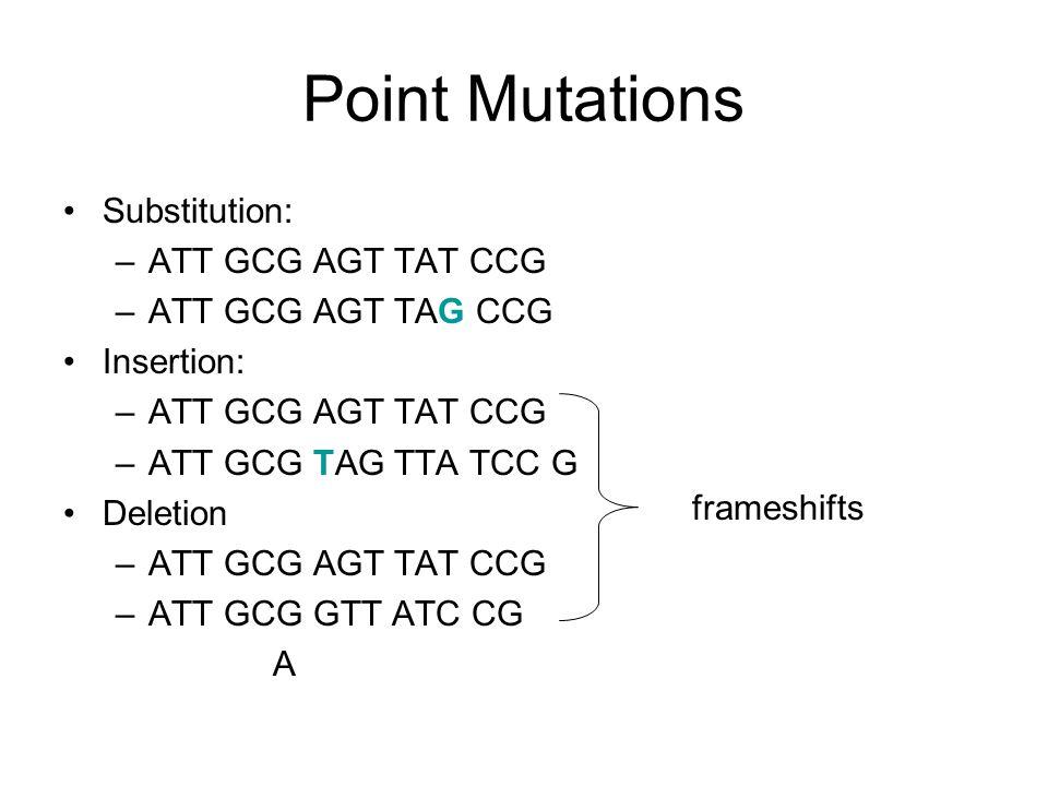 Point Mutations Substitution: –ATT GCG AGT TAT CCG –ATT GCG AGT TAG CCG Insertion: –ATT GCG AGT TAT CCG –ATT GCG TAG TTA TCC G Deletion –ATT GCG AGT TAT CCG –ATT GCG GTT ATC CG A frameshifts