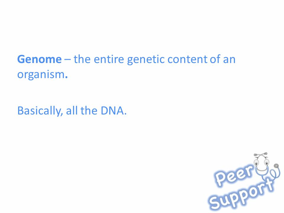 Genome – the entire genetic content of an organism. Basically, all the DNA.
