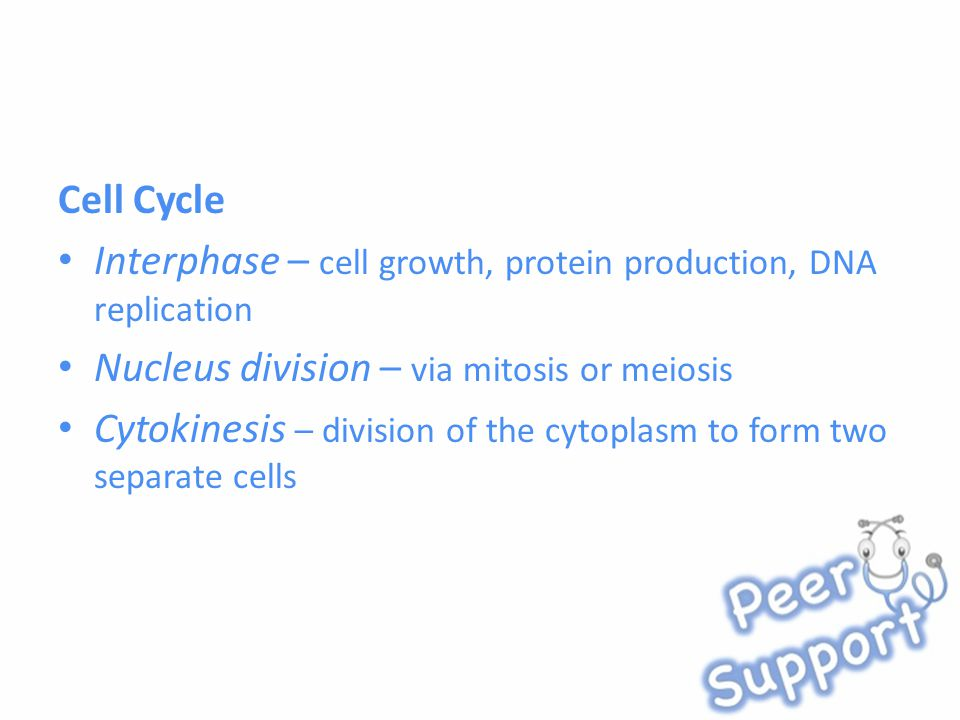Cell Cycle Interphase – cell growth, protein production, DNA replication Nucleus division – via mitosis or meiosis Cytokinesis – division of the cytoplasm to form two separate cells