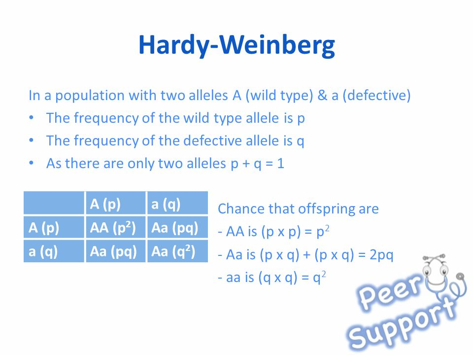 Hardy-Weinberg In a population with two alleles A (wild type) & a (defective) The frequency of the wild type allele is p The frequency of the defective allele is q As there are only two alleles p + q = 1 Chance that offspring are - AA is (p x p) = p 2 - Aa is (p x q) + (p x q) = 2pq - aa is (q x q) = q 2 A (p)a (q) A (p)AA (p 2 )Aa (pq) a (q)Aa (pq)Aa (q 2 )