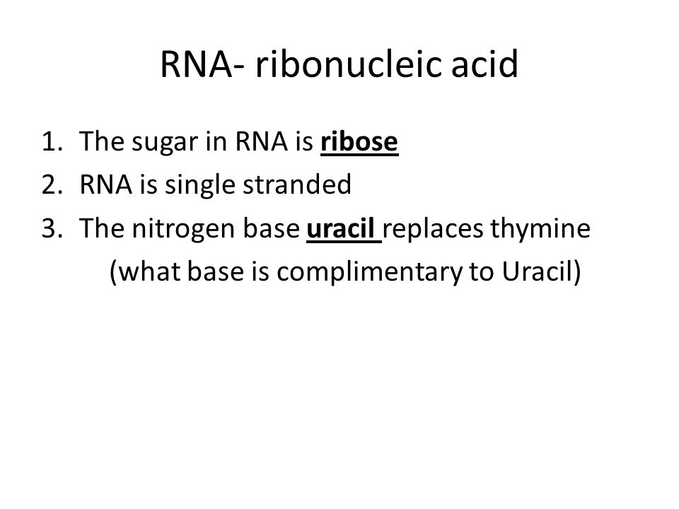 RNA- ribonucleic acid 1.The sugar in RNA is ribose 2.RNA is single stranded 3.The nitrogen base uracil replaces thymine (what base is complimentary to Uracil)
