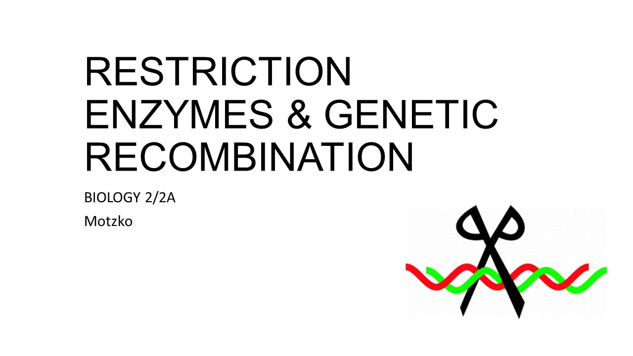 LAB: Genetic Recombination Purpose: To model the digestion of DNA strands by restriction enyzmes and the synthesis of recombinant DNA To demonstrate how the pGLO plasmid was constructed from bacterial plasmid DNA and two genes: beta-lactamase and GFP.
