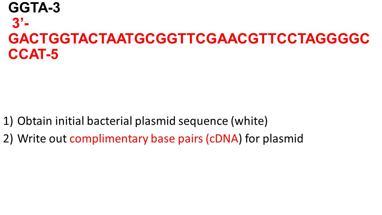 5'- CTGACCATGATTACGCCAAGCTTGCAAGGATCCCCG GGTA-3 3'- GACTGGTACTAATGCGGTTCGAACGTTCCTAGGGGC CCAT-5 1)Obtain initial bacterial plasmid sequence (white) 2)Write out complimentary base pairs (cDNA) for plasmid