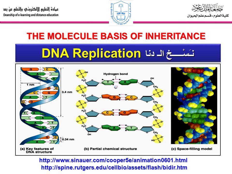 DNA Replication نـَسْـــــخ الـ دنا THE MOLECULE BASIS OF INHERITANCE http://spine.rutgers.edu/cellbio/assets/flash/bidir.htm http://www.sinauer.com/c