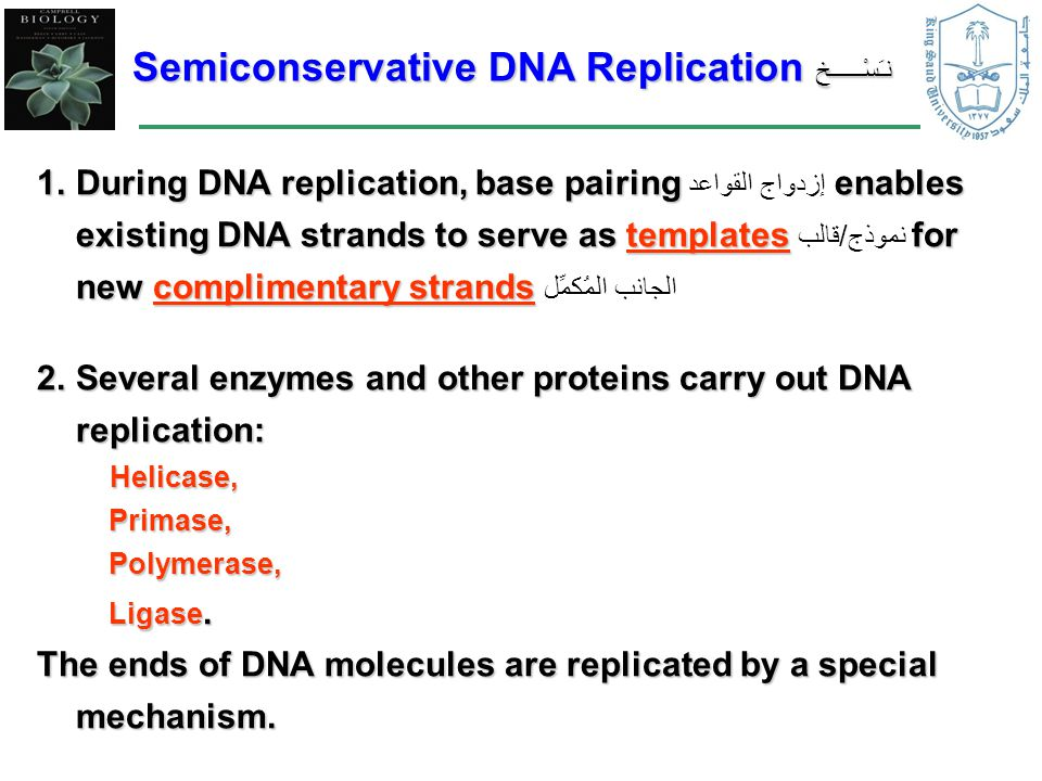 Semiconservative DNA Replication نـَسْـــــخ 1.During DNA replication, base pairing enables existing DNA strands to serve as templates for new complimentary strands 1.During DNA replication, base pairing إزدواج القواعد enables existing DNA strands to serve as templates نموذج/قالب for new complimentary strands الجانب المُكمِّل 2.Several enzymes and other proteins carry out DNA replication: Helicase, Helicase, Primase, Primase, Polymerase, Polymerase, Ligase.