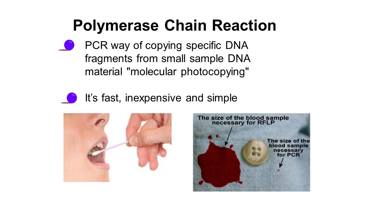 PCR way of copying specific DNA fragments from small sample DNA material molecular photocopying It's fast, inexpensive and simple Polymerase Chain Reaction