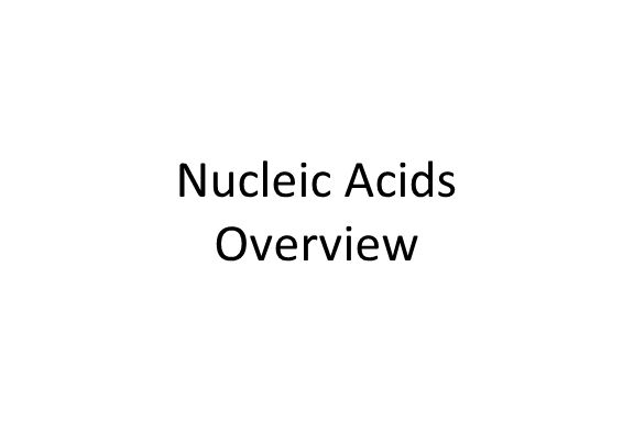 Nucleic Acids Overview