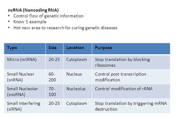ncRNA (Noncoding RNA) Control flow of genetic information Know 1 example Hot new area to research for curing genetic diseases TypeSizeLocationPurpose Micro (miRNA)20-25CytoplasmStop translation by blocking ribosomes Small Nuclear (snRNA) 60- 200 NucleusControl post transcription modification Small Nucleolar (snoRNA) 70- 100 NucleolusControl modification of rRNA Small Interfering (siRNA) 20-25CytoplasmStop translation by triggering mRNA destruction