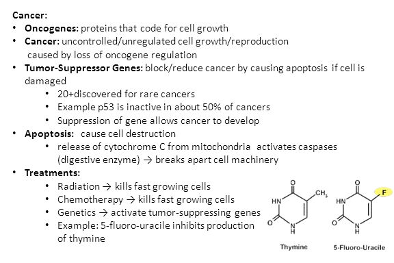 Cancer: Oncogenes: proteins that code for cell growth Cancer: uncontrolled/unregulated cell growth/reproduction caused by loss of oncogene regulation Tumor-Suppressor Genes: block/reduce cancer by causing apoptosis if cell is damaged 20+discovered for rare cancers Example p53 is inactive in about 50% of cancers Suppression of gene allows cancer to develop Apoptosis: cause cell destruction release of cytochrome C from mitochondria activates caspases (digestive enzyme) → breaks apart cell machinery Treatments: Radiation → kills fast growing cells Chemotherapy → kills fast growing cells Genetics → activate tumor-suppressing genes Example: 5-fluoro-uracile inhibits production of thymine