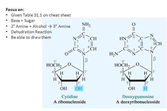 Focus on: Given Table 31.1 on cheat sheet Base + Sugar 2° Amine + Alcohol → 3° Amine Dehydration Reaction Be able to draw them