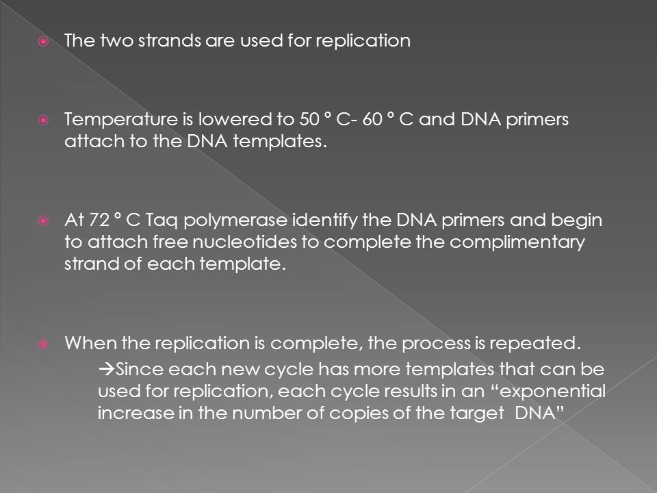 The two strands are used for replication  Temperature is lowered to 50 º C- 60 º C and DNA primers attach to the DNA templates.  At 72 º C Taq pol