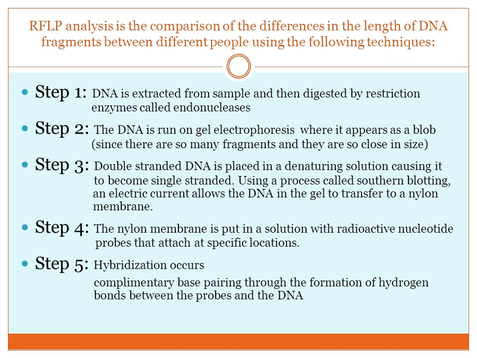 RFLP analysis is the comparison of the differences in the length of DNA fragments between different people using the following techniques: Step 1: DNA