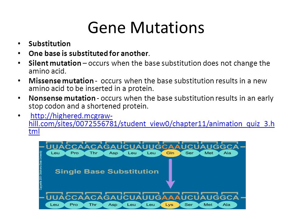 Gene Mutations Substitution One base is substituted for another. Silent mutation – occurs when the base substitution does not change the amino acid. M