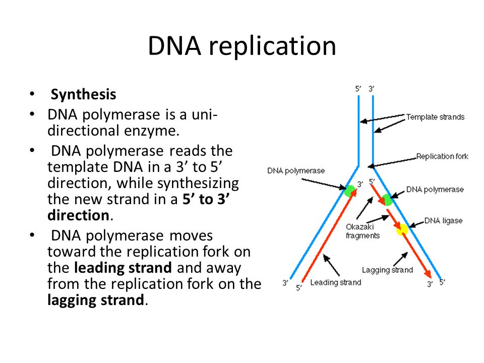 Protein Synthesis Translation Initiation Small ribosomal unit binds to initiator tRNA with its methionine.