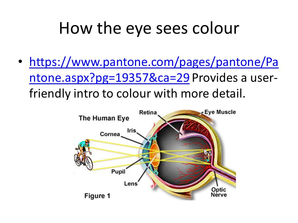 How the eye sees colour https://www.pantone.com/pages/pantone/Pa ntone.aspx?pg=19357&ca=29 Provides a user- friendly intro to colour with more detail.