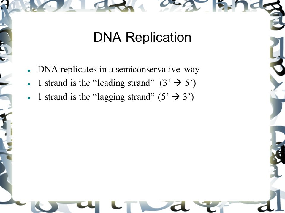"DNA Replication DNA replicates in a semiconservative way 1 strand is the ""leading strand"" (3'  5') 1 strand is the ""lagging strand"" (5'  3')"