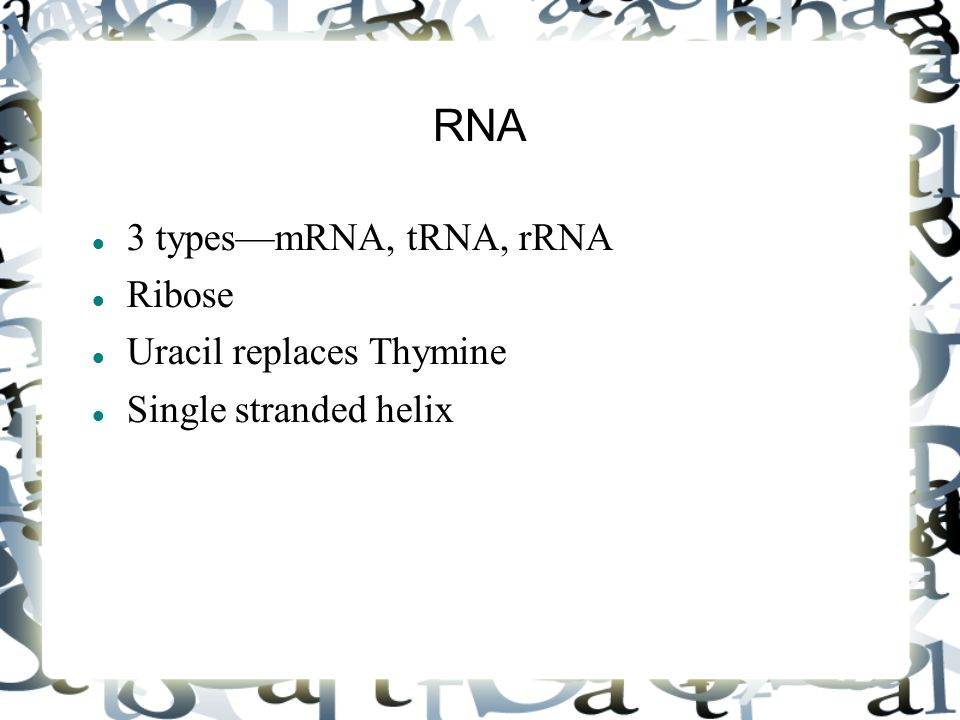 RNA 3 types—mRNA, tRNA, rRNA Ribose Uracil replaces Thymine Single stranded helix