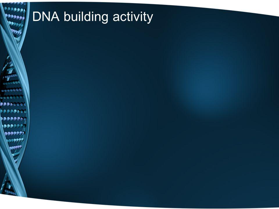DNA building activity