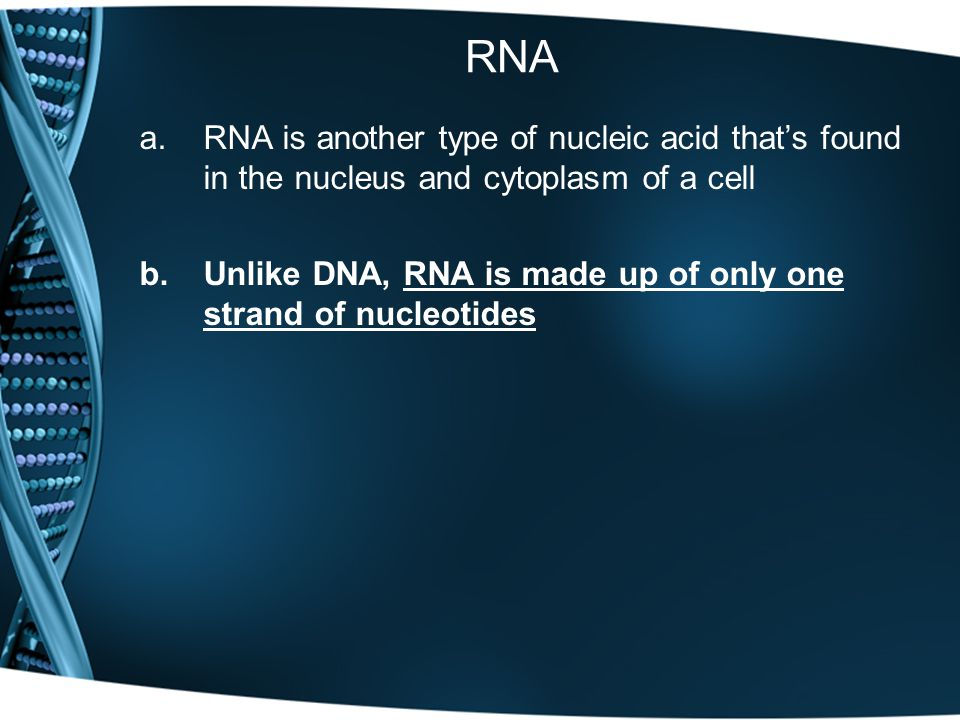 RNA a.RNA is another type of nucleic acid that's found in the nucleus and cytoplasm of a cell b.Unlike DNA, RNA is made up of only one strand of nucleotides