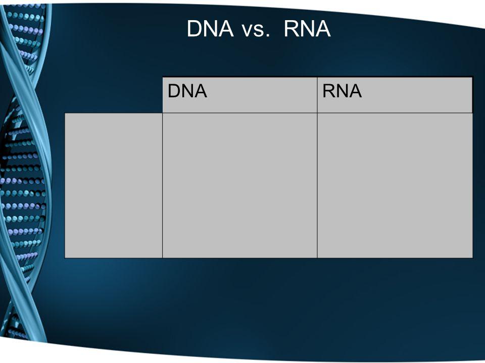 DNA vs. RNA DNARNA