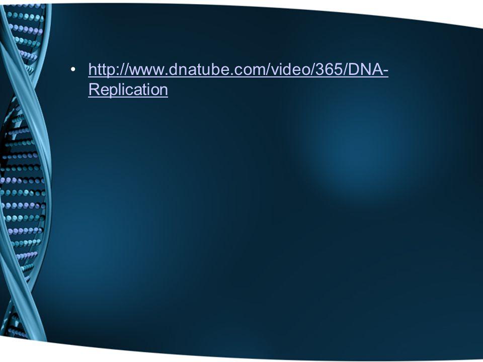 http://www.dnatube.com/video/365/DNA- Replicationhttp://www.dnatube.com/video/365/DNA- Replication