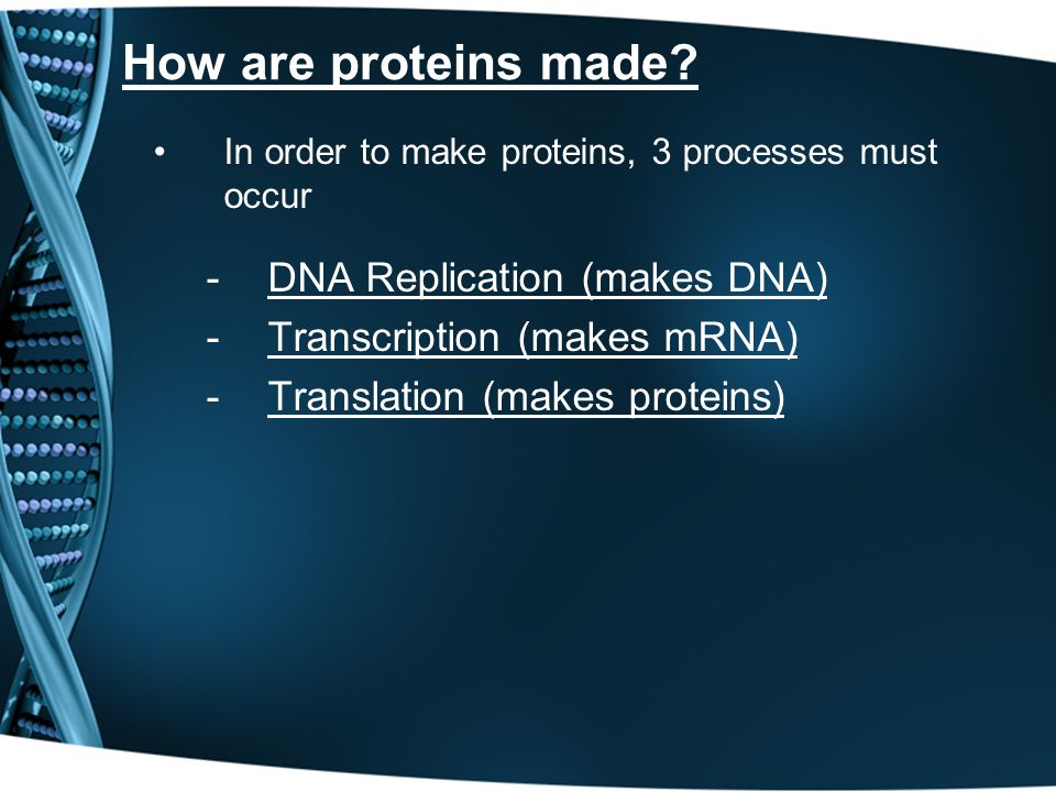 How are proteins made.