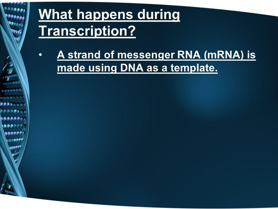 What happens during Transcription.