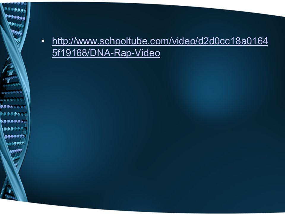 http://www.schooltube.com/video/d2d0cc18a0164 5f19168/DNA-Rap-Videohttp://www.schooltube.com/video/d2d0cc18a0164 5f19168/DNA-Rap-Video