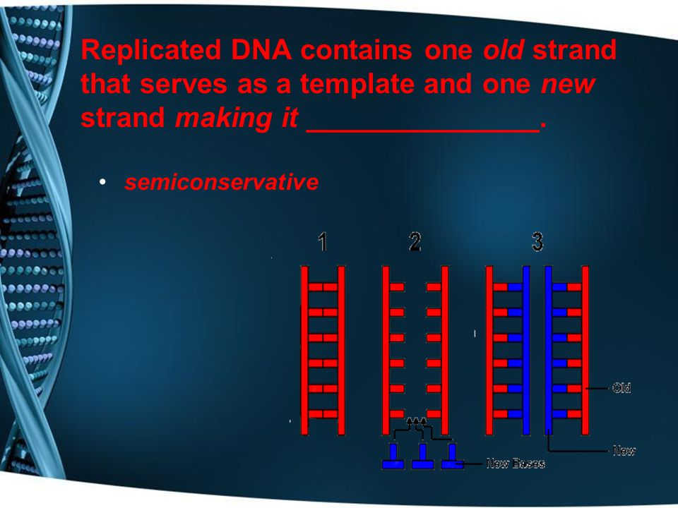 Replication must occur prior to any type of cell division so that each daughter cell has a __________ to run the cell.