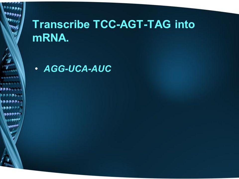 Transcribe TCC-AGT-TAG into mRNA. AGG-UCA-AUC