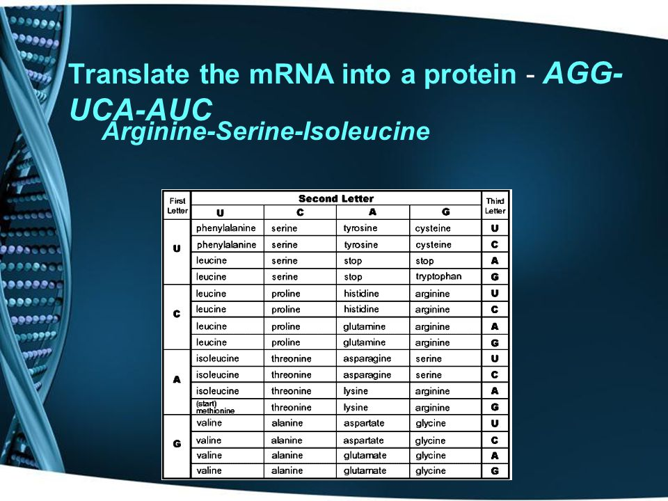If the anticodon on T-RNA reads UGC, what amino acid does it code for? ACG Threonine