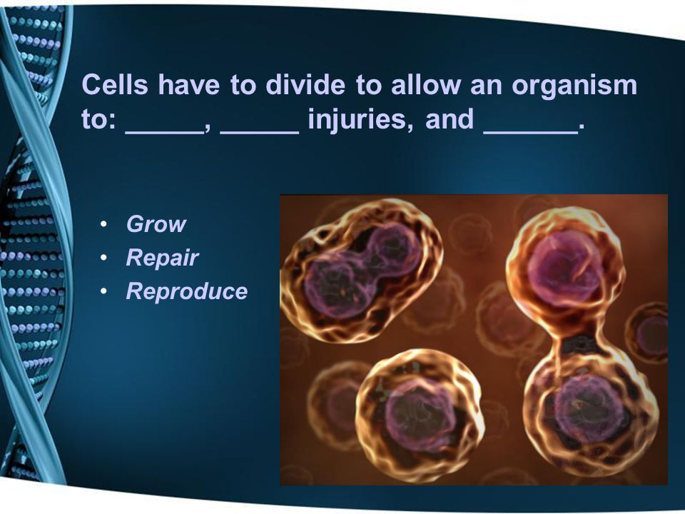 Part of the cell cycle where the cell spends the majority of its life cycle growing and synthesizing DNA is _________.