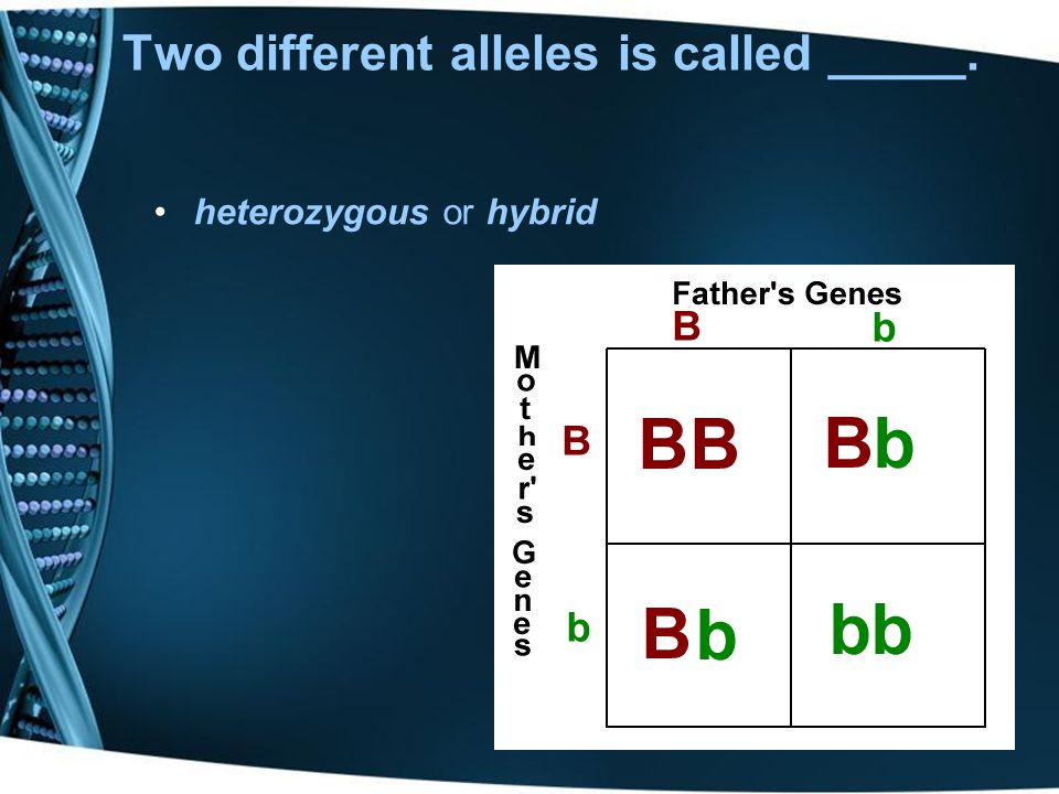 The bossy allele that always shows itself and masks the other alleles is __________. Dominance