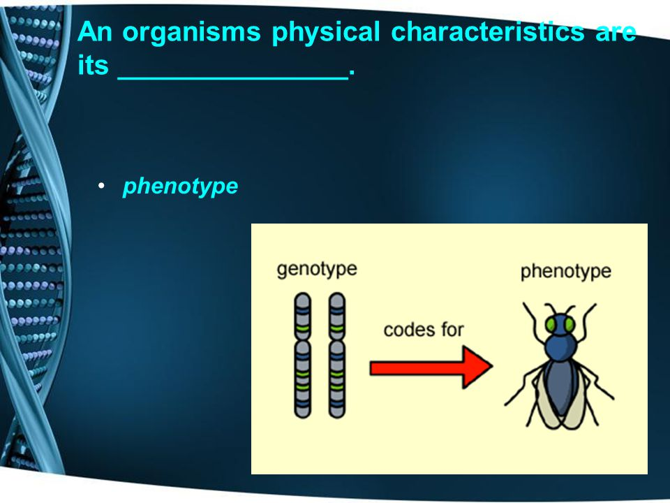 Results in a phenotype where the two dominant alleles show up equally ____________. codominance
