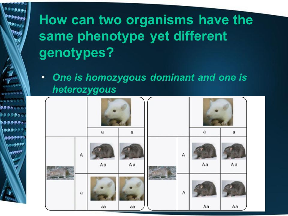 Mendel's principle that the alleles separate during meiosis _______. Principle of Segregation