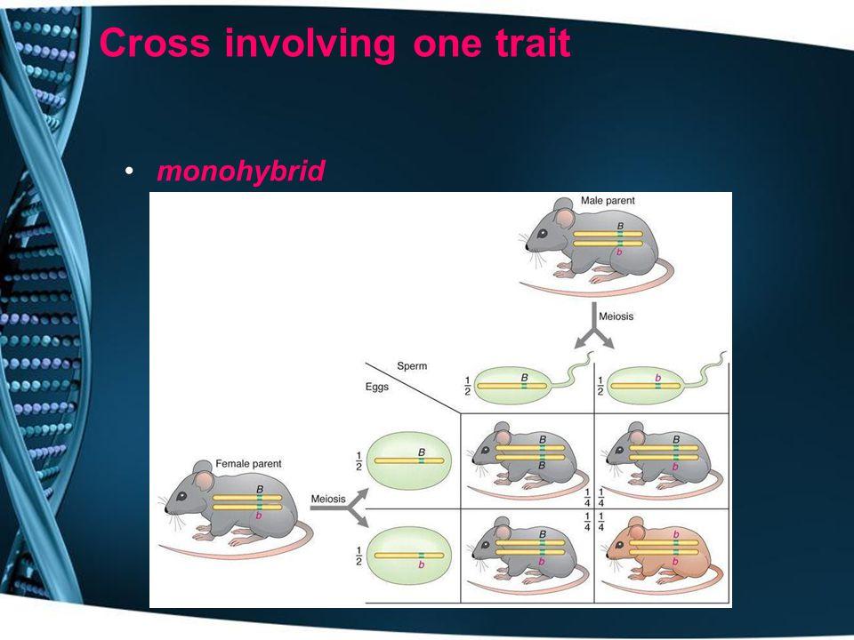 Cross involving one trait monohybrid