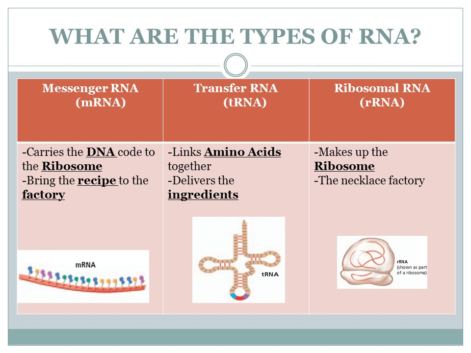 WHAT ARE THE TYPES OF RNA.