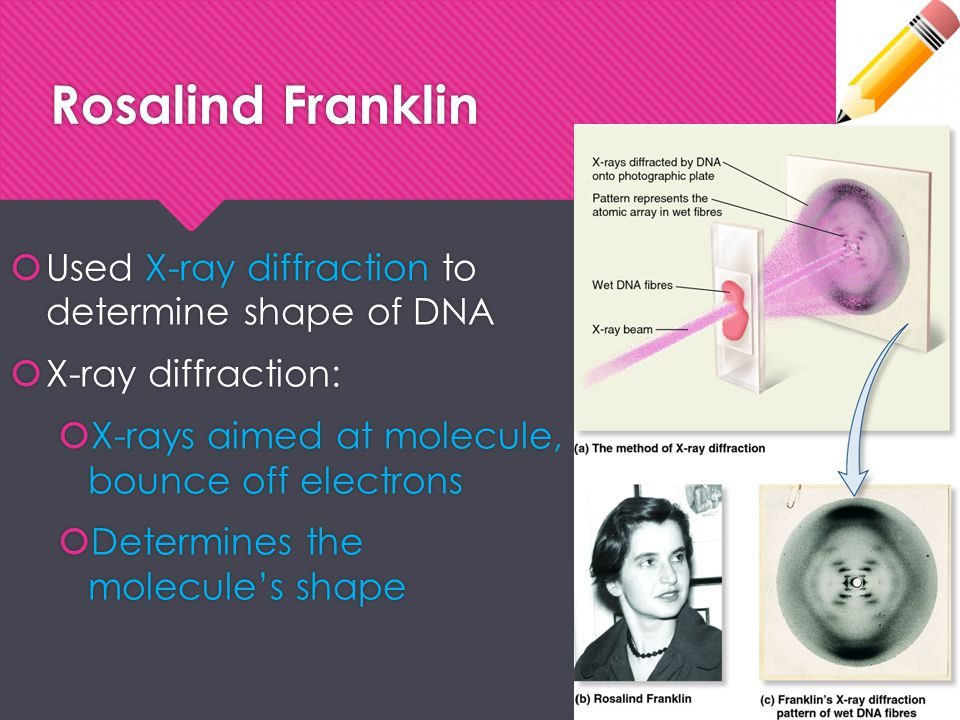 Rosalind Franklin  Used X-ray diffraction to determine shape of DNA  X-ray diffraction:  X-rays aimed at molecule, bounce off electrons  Determine