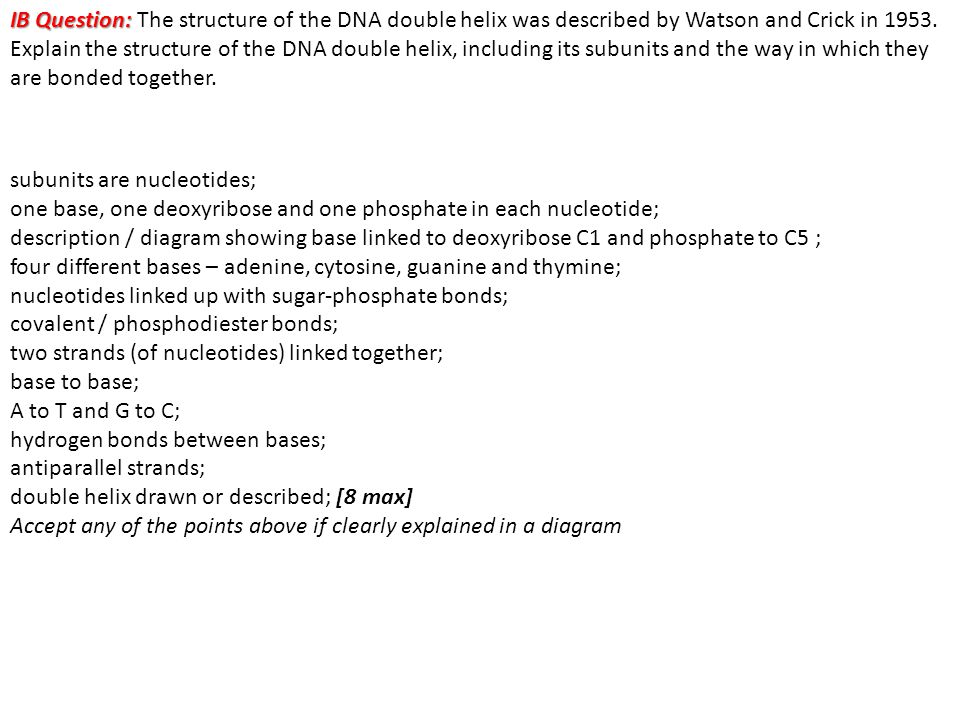 IB Question: IB Question: The structure of the DNA double helix was described by Watson and Crick in 1953. Explain the structure of the DNA double hel