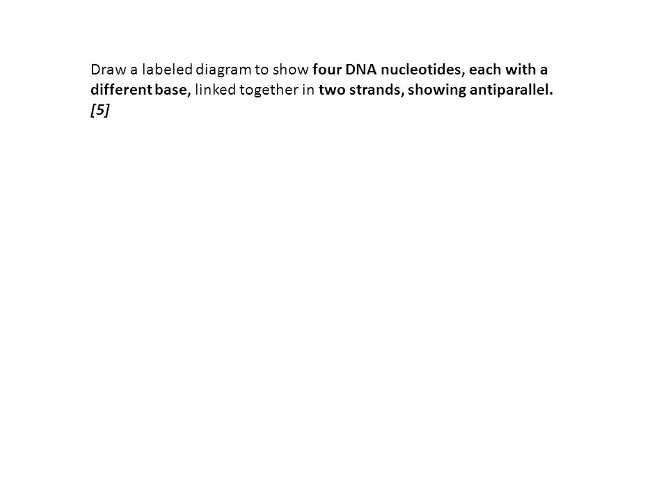 3.4.2:Explain the significance of complementary base pairing in the conservation of the base sequence of DNA.