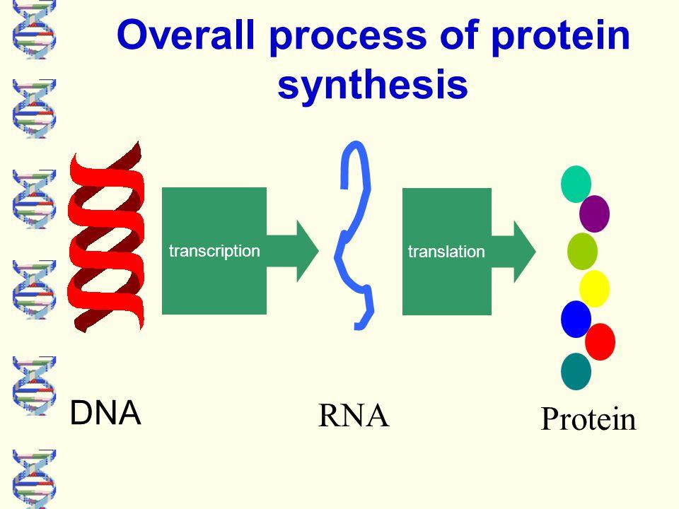 Remember there are three types of RNA mRNA tRNA towing Amino acid  rRNA: ribosomal RNA  scans & reads the mRNA  tRNA: transfer RNA.