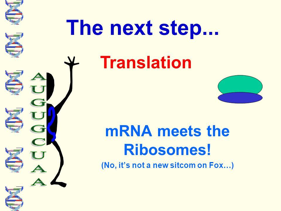 Closer look at transcription