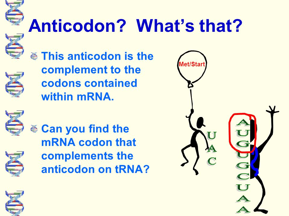 tRNA: Transfer RNA Met/start Chemically, tRNA is clover-leaf shaped.