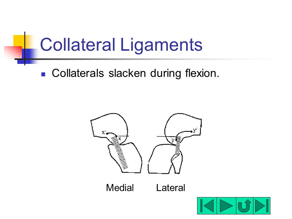 Collateral Ligaments Collaterals slacken during flexion. Medial Lateral