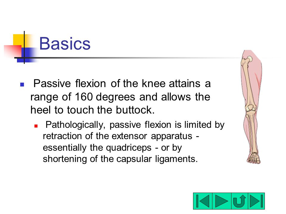 Basics Passive flexion of the knee attains a range of 160 degrees and allows the heel to touch the buttock. Pathologically, passive flexion is limited