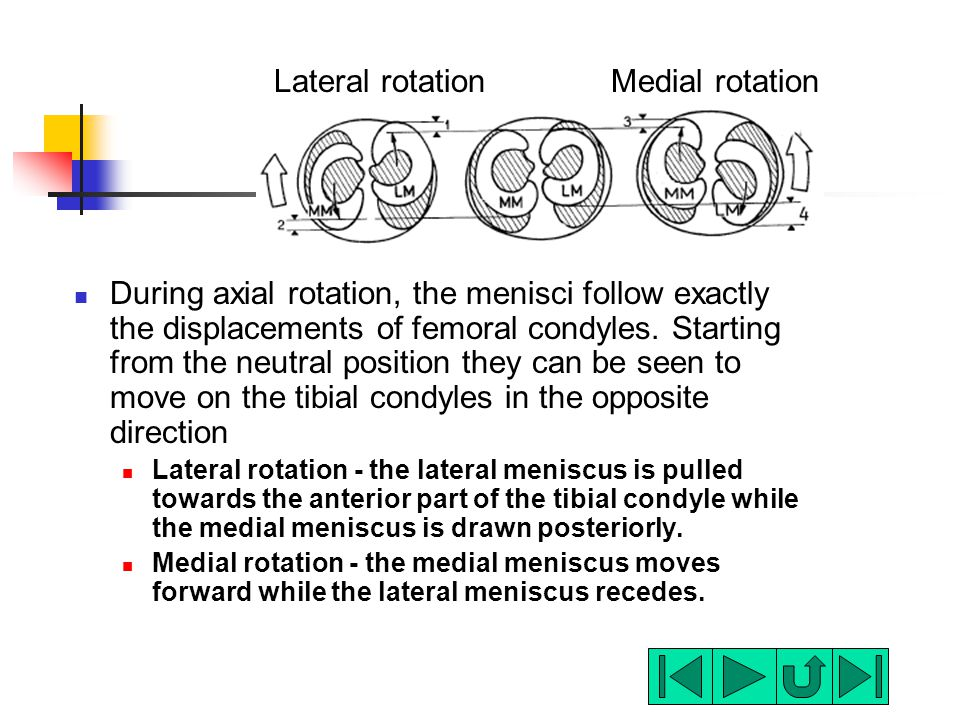 During axial rotation, the menisci follow exactly the displacements of femoral condyles. Starting from the neutral position they can be seen to move o