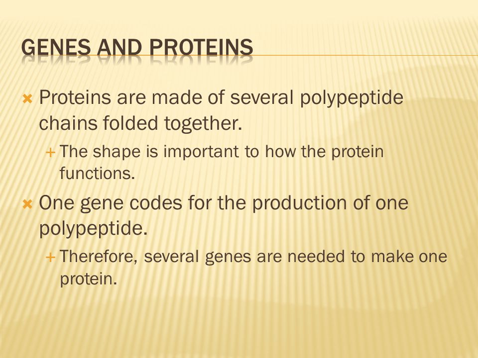  Proteins are made of several polypeptide chains folded together.  The shape is important to how the protein functions.  One gene codes for the pro